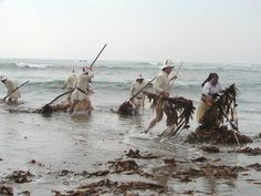 The Sargaceiros of Apulia were men and women who on certain occasions, abandoned the work in the fields and went to the beach to catch the algae (sargaço) brought to the shore by the sea in order to use them to fertilize the fields, after being dried in the sun. Completed the season of harvesting of sargaço, they returned to his farming activities.