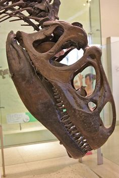 Dinosaur Skull at New York's Museum of Natural History   NYC Photo Gallery- Going Green In New York City  www.greenglobaltravel.com