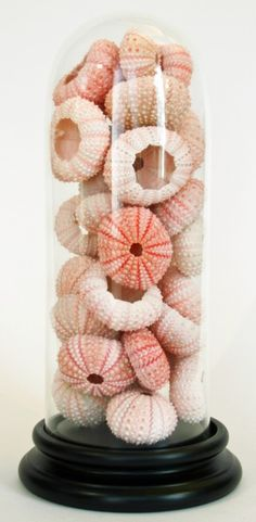 a beautiful way to add color and show of sea urchin shells. They come in various colors like green and purple too! Seashell Display, Seashell Art, Seashell Crafts, Beach Crafts, Diy Crafts, Sea Urchin Shell, Sea Urchins, The Bell Jar, Bell Jars