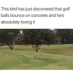 Bird Plays with Golf Ball - Tier - Humor Funny Funny Animal Memes, Funny Animal Videos, Cute Funny Animals, Funny Animal Pictures, Cute Baby Animals, Funny Cute, The Funny, Funny Jokes, Hilarious
