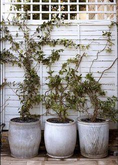 Vintage zinc barrels planted to creep up the garden wall. | Image via Lambert NYC