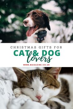 Looking for that perfect gift for a pet owner? We all know someone crazy about their cat or dotty about their dog who'd love a special treat on behalf of their kitty or pooch. Check out our round-up of Christmas Gifts for cat and dog lovers - purring and tail wags guaranteed!