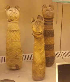 Some mummified cats at Bologna's civic archaeological museum. The museum is mostly closed for renovations so only the Egyptian galleries are open to visitors at the moment but still worth a visit!