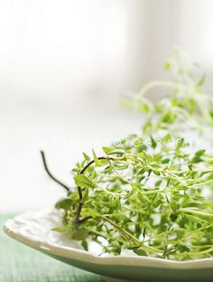 #Thyme - Pure Vegetarian By Lakshmi  #herb #photography