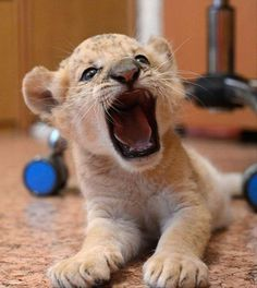 cute animal pictures dumpaday (22)