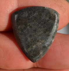 Guitar Pick Devonian coral Prehistoric Plectrum DV17 by Highrroad