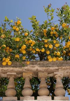 mediterranean serafini sicilian living amelia italia lemon tree Mediterranean Living Serafini Amelia Italia Sicilian lemon treeYou can find Northern italy and more on our website Nature Aesthetic, Summer Aesthetic, Travel Aesthetic, Aesthetic Vintage, Aesthetic Yellow, Aesthetic Outfit, Beach Aesthetic, Aesthetic Photo, Aesthetic Girl