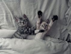 Picture of Cute Cats in Bed