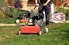 Trávniky sú vkusným prvkom našej záhrady, len keď sú zdravo vyzerajúce - zelené a svieže. V zlých stanovištných  podmienkach s nedostatkom zrážok, nevhodným pH pôdy, či jej slabým prevzdušnením alebo nadmerným zhutnením, stávajú sa len umelým biotopom. Najvhodnejšími pôdami pre pestovanie trávnika sú stredne ťažké, hlinito pieskovité až piesčito hlinité.