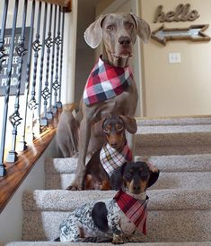 Happy Harlowdays! If you are in the Salt Lake City area next weekend, come and see us! We will be signing copies of our new book: Harlow & Indiana (and Reese) at Barnes & Noble in Sugarhouse on December 19th at 1:00 o'clock. And if you are not in the area but would like to get a copy of the book, visit: www.harlowandsage.com