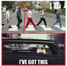 Grumpy Cat looks out for 1D on Abbey Road