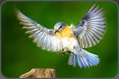 sparrow   Unique Beauty....   Pinterest   Sparrows and Photos