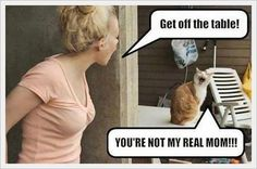 funny cats, humor, You're not my real mom Haha Funny, Funny Cats, Funny Animals, Funny Jokes, Funny Stuff, Silly Cats, Stupid Cat, That's Hilarious, Mom Funny