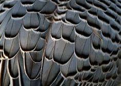 Resultado de imagen de  перья