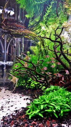 Competent tutored amazing aquarium more information