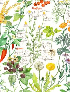 Watercolor food illustrations, Kitchen wall art prints by lucileskitchen Herbs Illustration, Botanical Illustration, Watercolor Illustration, Food Illustrations, Watercolor Food, Watercolor Flowers, Watercolor Paintings, Watercolour, Healing Herbs