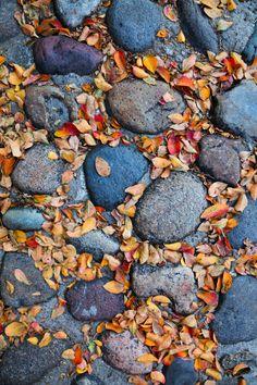 Cobblestone street in autumn by Doug Hickok