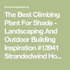 The Best Climbing Plant For Shade - Landscaping And Outdoor Building Inspiration #13941 Strandedwind Home Inspiration
