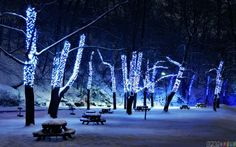 blue winter lights