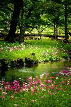 What a pretty scene with the flowers growing along side the water and the light green grass.