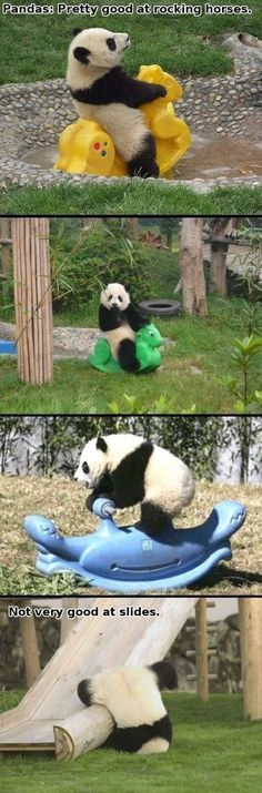panda on a rocking horse? oh my.