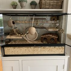 Hamster Diy Cage, Hamster Care, Wooden Wheel, Wooden Ladder, Animal Room, Animal House, Childrens Play Sand, Giant African Land Snails, Hedgehog Cage