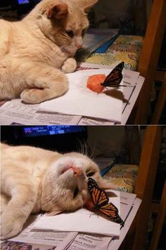 Here are few Funny Animal Photos and Funniest Memes that will surely make up your day ALSO READ: Top 20 Hilarious Soccer Memes Top 25 Best Funny Animal Memes ALSO READ: 25 Funny Friday Memes … Funny Animal Photos, Cute Funny Animals, Animal Memes, Funny Cute, Cute Cats, Funny Pics, Animals Photos, Funniest Animals, Hilarious