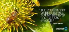 """""""The pollination of bees is free, but no bee ever sent you an invoice."""" — Pavan Sukhdev"""