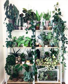 Indoor Vertical Gardening Tips and Ideas Organic gardening isn't always about food to eat. Some people enjoy growing flowers and other forms of plant life as well. You can grow anything bereft of harmful chemicals as long as you're d Room With Plants, House Plants Decor, Plant Decor, Big Plants, Plant Aesthetic, Aesthetic Green, Decoration Plante, Plant Shelves, Shelves With Plants
