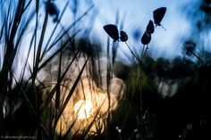 Double butterfly silhouette by Alberto Baruffi on 500px