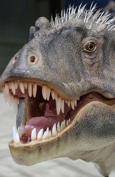 Utah Natural History Museum unveil new dinosaur Lythronax argestes Prehistoric Dinosaurs, Dinosaur Fossils, Prehistoric Creatures, Real Dinosaur, Dinosaur Art, Historia Natural, Extinct Animals, Rare Animals, Tyrannosaurus Rex
