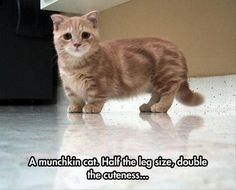 Funny Animal Pictures (8)