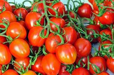 The Indoor Winter Garden: 5 Vegetables You Didn't Know You Could Grow In Hanging Baskets - Off The Grid News - PickPin Growing Tomatoes Indoors, Growing Tomatoes From Seed, Growing Tomatoes In Containers, Grow Tomatoes, Cherry Tomatoes, Tomato Cultivation, Best Tasting Tomatoes, Off The Grid News, Indoor Vegetable Gardening