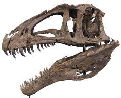 Динозавры для Софьи Алексеевны. Часть седьмая: акрокантозавр: scienceblogger