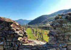 Wandern am Panoramaweg Rossatz   Wachau Inside Vineyard, Outdoor, Hiking, Viajes, Outdoors, Vine Yard, Vineyard Vines, Outdoor Games, The Great Outdoors
