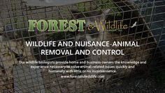 Forest and Wildlife Group are experts in animal and nuisance wildlife removal, control, and exclusion.   Our wildlife biologists provide home and business owners the knowledge and experience necessary to solve animal-related issues quickly and humanely with little or no inconvenience.