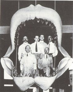 "The megalodon, Carcharodon megalodon, (from ancient Greek μεγας = ""big"" + 'οδους (genitive 'οδοντος) = ""tooth"") was a giant prehistoric shark that probably lived between about 16 to 1.6 million years ago, but some maintain that they went extinct only 10,000 years ago. It is considered to be the largest predatory fish to have ever lived."