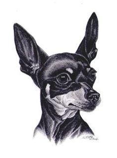 miniature pinscher drawing - Google keresés