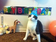 Lolcats - birthday - lol at funny cat memes - funny cat pictures Funny Cat Memes, Funny Cats, Funny Animals, Cute Animals, Hilarious, Animal Funnies, Crazy Cat Lady, Crazy Cats, Cat Birthday