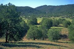 37 Acres in Apache County, Arizona. This property is used for land - recreational and land - undeveloped. A 37 acre property with an asking price of $22,500. Sierra Highlands Ranch   Tracts 24, 25 &