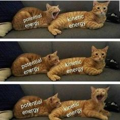 """Eighteen Quark-y Physics Memes For The Nerds - Funny memes that """"GET IT"""" and want you to too. Get the latest funniest memes and keep up what is going on in the meme-o-sphere. Funny Shit, Haha Funny, Funny Cute, Hilarious, Lol, Funny Stuff, Diy Funny, Nerd Stuff, Funny Animal Memes"""