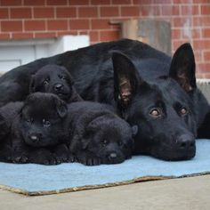 I want them all 🐾💗