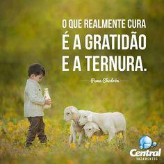 """""""O que realmente cura é a gratidão e a ternura."""" Pema Chödrön Boa noite!  Tags: #CentralVazamentos #Sustentabilidade #MeioAmbiente #UsoConscienteDaÁgua #FaçaSuaParte #EconomizeÁgua #EconomiaDeÁgua #Preserve #Gratidão #Ternura #Quotes #Frases #reflexão #pensamentos #Reflexões #BoaNoite #pemachodron by centralvazamentos http://ift.tt/1Z9dFlh"""