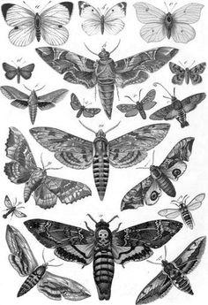 moths butterflies
