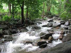Dhoni water falls western ghats