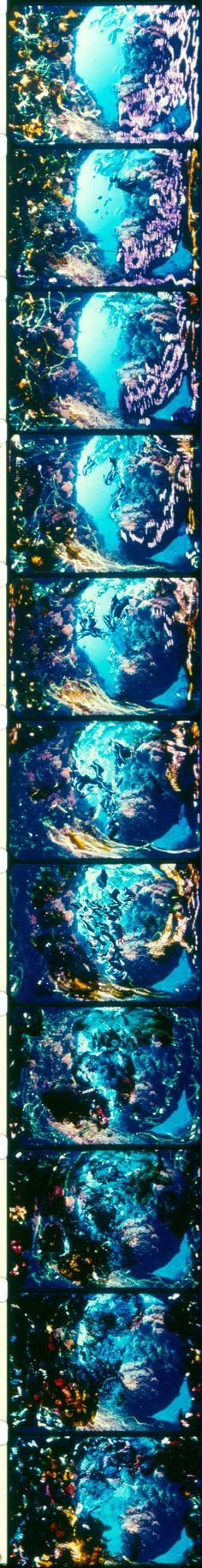LONG STRIP OF BRAKHAGE / A film print scan of Stan Brakhage's experimental film Existence is Song.