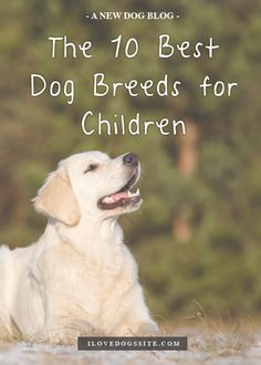 Must read for any family considering getting a dog! http://theilovedogssite.com/the-10-best-dog-breeds-for-children/?src=PIN_ILDS_10BestBreedsForKids_1-18-14