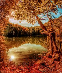 Photo of Autumn🍂 for fans of Autumn 42928136
