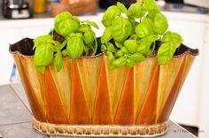 there will be fresh herbs grown this summer! herbs: how to grow, use. Outdoor Pots, Modern Garden Design, Growing Herbs, Fresh Herbs, Herb Garden, Home And Garden, Celery, Beautiful Gardens, Gardening Tips