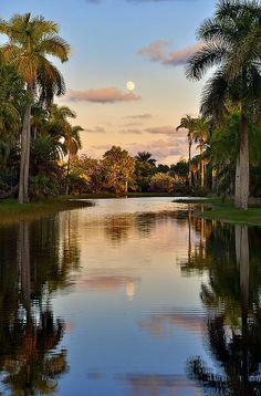 Fairchild Tropical Botanic Garden - Coral Gables - Florida - USA (von pedro lastra)